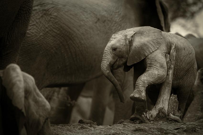 Südafrika Madikwe Game Reserve Big 5 Tanago Fotoreisen
