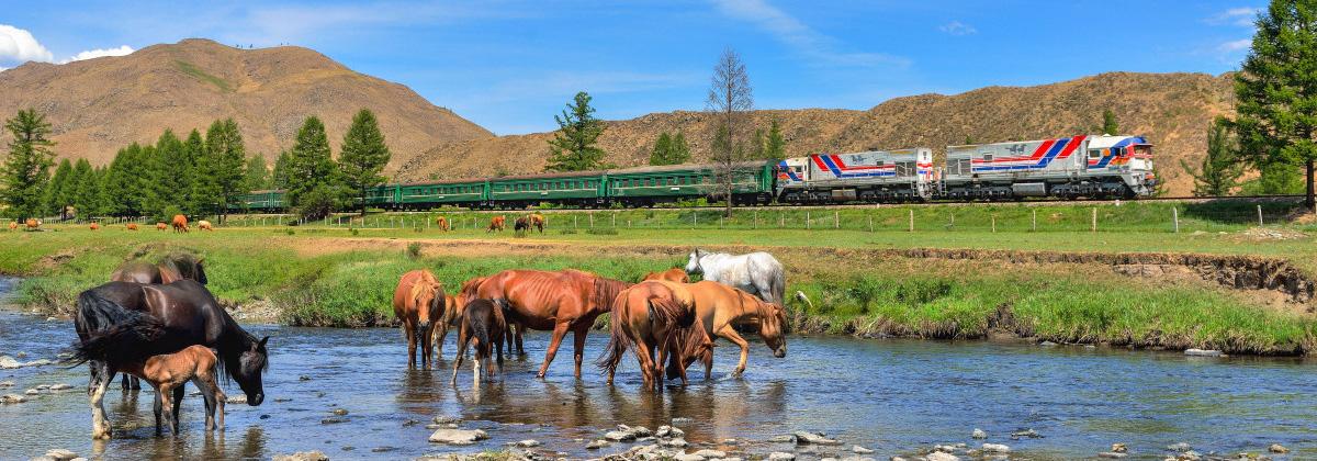 Mongolei Transmongolia Tanago Eisenbahnreisen